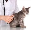Ветеринарные клиники в Кимовске